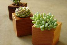 Suculentas!! Crasas!! / Succulent garden!!