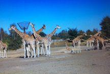 Safaripark de beekse bergen tilburg / Beekse bergen tilburg