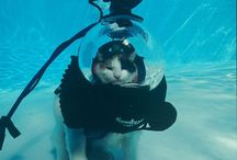 Scuba is for everything