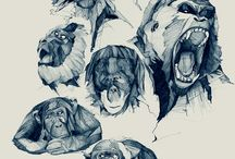 Ape sketches