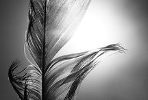 AP ART STUDIO... Photography / by Ligia Ciotau