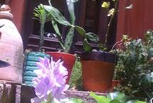 Nuestros patios y su flora