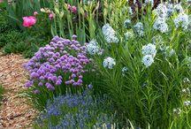 Dom i ogród / Home & Garden
