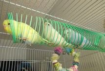 Toys for parrots