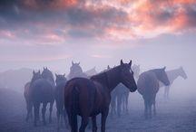 Hästar/Tumblr