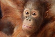 The Orangutan Project Fundraising Event
