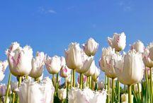 Bloemen en planten / Van oudsher legt de Efteling een grote zorg aan de dag voor natuur en milieu. Naast de mooiste sprookjes en leukste attracties vind je ook schitterende bloemen en planten in de Efteling.