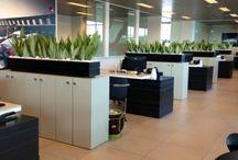 plants for office / rośliny do biura