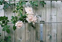 Garden / by Annette Luurtsema