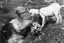 Soldats et animaux