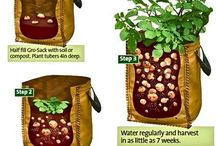 Container Gardening / How to Grow Your Own Vegetables in Small Spaces