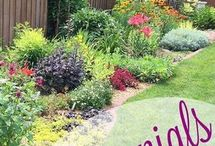 Plants for colourful garden