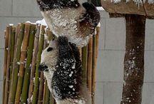 robyn's panda nation / by toni lynch