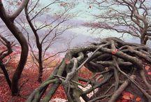 Nature / colours & structures