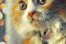 Animalistic / Dyr. Animals. Animalprint