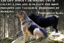Pet Scrapbooking / He allows us to experience His love through their eyes and the joy of Heaven with the wag of their tails.