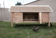 the Hen House / by Sarah Wilson