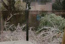 Instagram https://www.instagram.com/p/BOC-12jBzxg/ December 15, 2016 at 12:43PM Fallen #icetree in backysrd #icestorm #eugene.