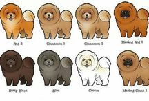 Chow chow colors