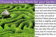 Choosing the Best Plants for your Gardens