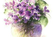 Acquerello, watercolor