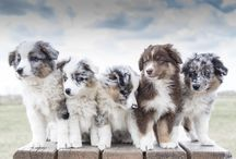 Dog Breeds / Inspiration + info to help you choose your perfect pooch.