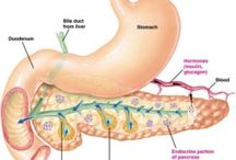 Pancreatic Health