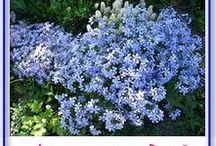 сад цветы флоксы