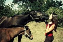 My passion / horses