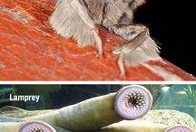 Wow animals / Weird animals