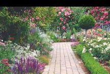 garden / by Amie Raines