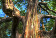༺ ❤ ༻ TREES world / ℬ૯aน†ifนℓ / by Infinito Neergaard