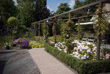 Klassieke Cottagetuin / De tuin kenmerkt zich als een weelderig bloeiende tuin waar je vrolijk van wordt. Met een op het eerste oog willekeur aan kleuren en soorten planten, maar tot zeer genuanceerd aangelegd om de kleuren, bloeitijden en hoogteverschillen optimaal tot zijn recht te laten komen.  Eyecathcer in de tuin is de pergola met verschillende soort bloeiende klimplanten, zoals blauwe regen,klimrozen, clematissen en trompetbloeier.  Deze tuin is aangelegd door: Visio Vireo Tuinen!