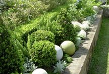 Box Hedging - Garden ideas