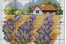 Lawenda/Lavandula/Lavender