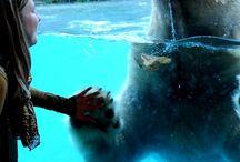 Zoo/animaux