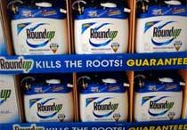 Glyphosate / Monsanto's Roundup is the world's most used herbicide. Its residue has contaminated our water, air and food chain. As a consequence, the herbicide is regularly detected in human urine. Several converging lines of research in laboratory animals suggest that glyphosate-based herbicides may be endocrine disruptors and alter liver and kidney function. The WHO categorized it as a probable carcinogen.  Yet, in 2014 the EPA quietly raised the acceptable level of glyphosate residue in food.