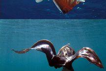 морские твари