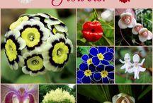 kvety, krasa prírody