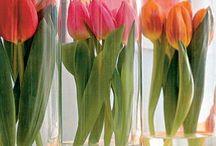 Deco - Spring