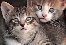 Kedi :)))