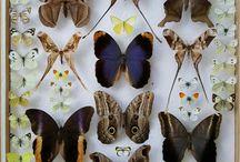 Motyle .Butterfly
