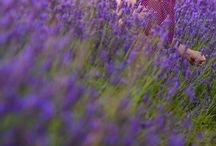 Lavender-love