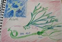 5th Grade Botany / by Mama Goose