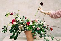 c'est le bouquet ! / by Chloe Sommelet