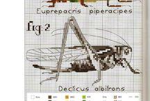 십자수곤충