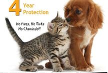 Animals & Pets / Animals & Pets