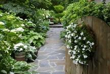 • Shade gardens / Shade gardening