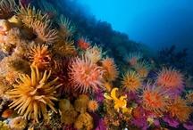 Sea life fresh life / by Eve Hogue