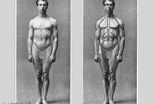deeAuvil Anatomy For Sculptors